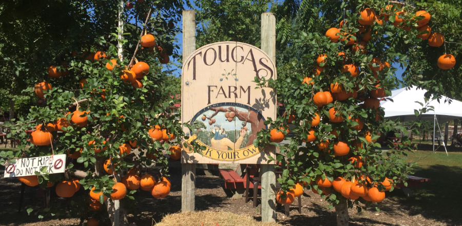 Fall is on the Rise: The Best Places to Apple Pick This Fall
